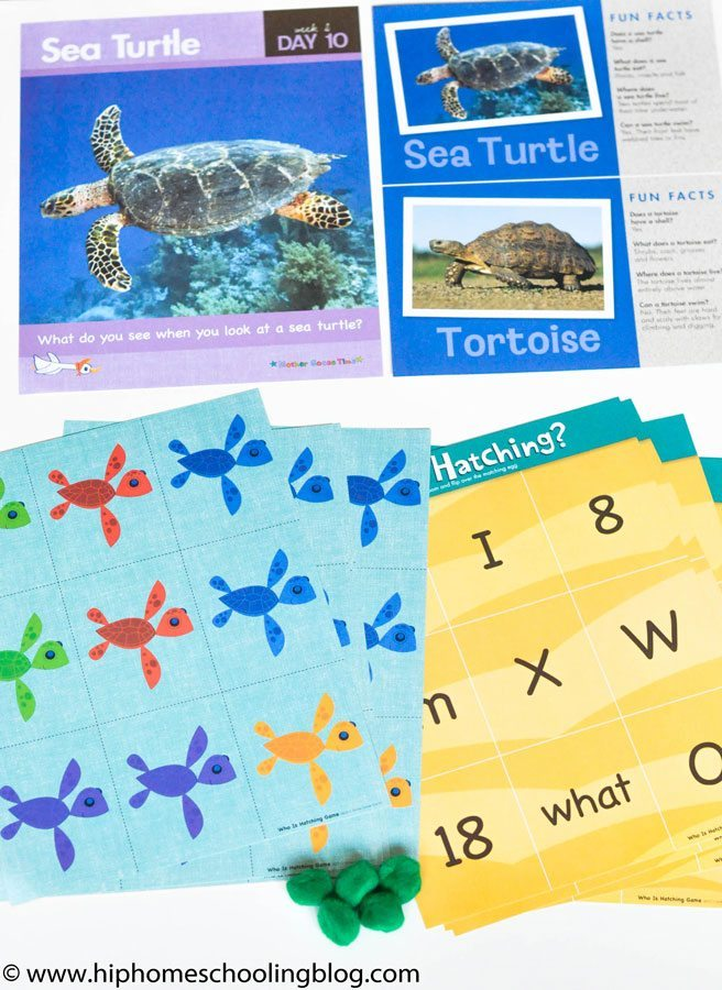 Preschool homeschool curriculum Learning about Sea Turtles with Mother Goose Time