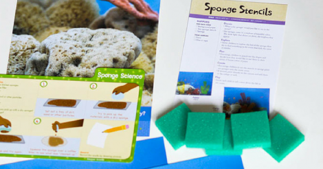Our Preschool Curriculum: From Seahorses to Sea Sponges