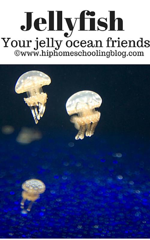 free jellyfish book