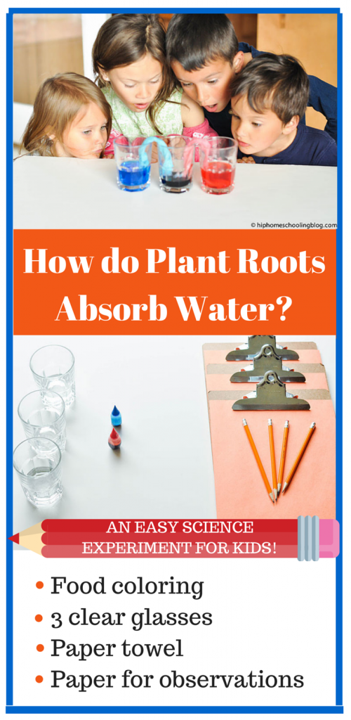 Plant Science: How do Plant Roots Absorb Water? Try this easy experiment!