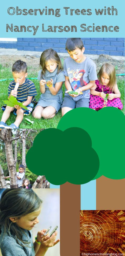 observing trees with nancy larson science. Homeschooling | homeschooling science | homeschool science | elementary science | nancy larson science review
