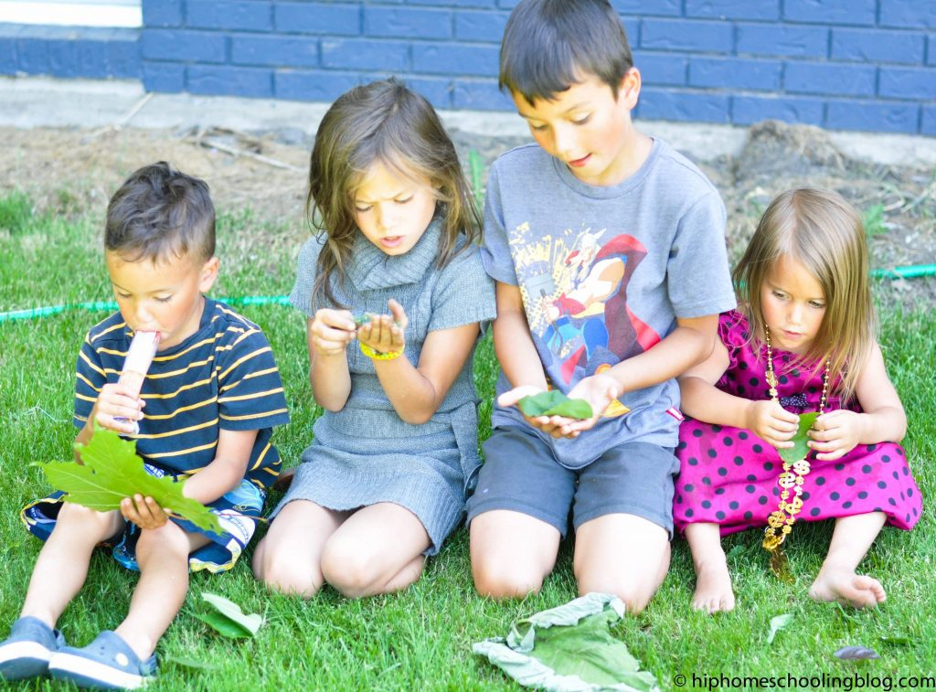 Comparing Leaves with Nancy Larson Science Curriculum