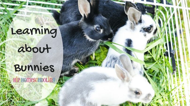 Learning about Bunnies and Favorite things Friday #15