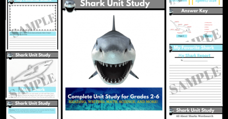 Shark Unit Study: Come learn about sharks with us!