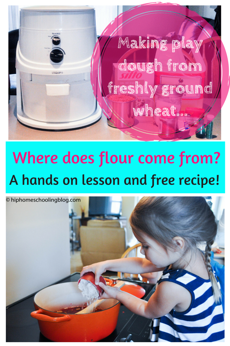 Making play dough from freshly ground wheat. Where does flour come from? A hands on lesson and free recipe!