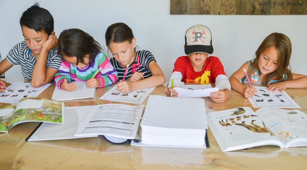 The Best Charlotte Mason Science Curriculum: Join us for our year-long nature study!